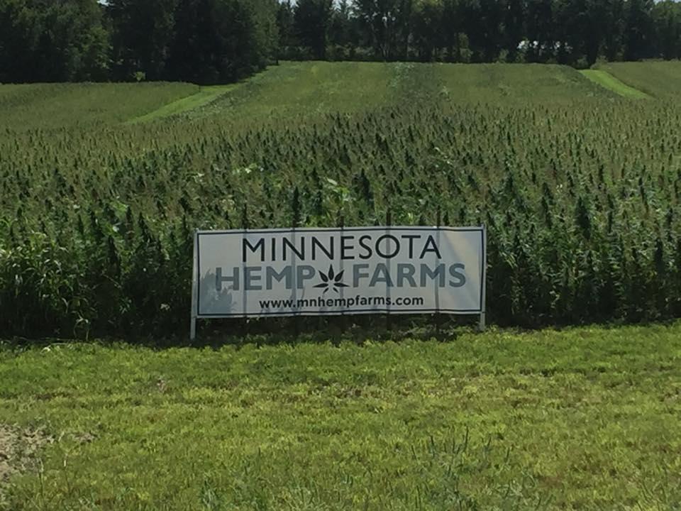 Marketing & Contracting - MN Hemp Farms